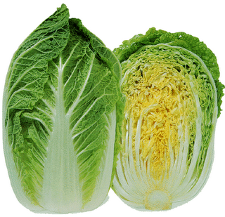 Napa Cabbage1